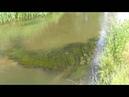 ДЕНЬ НА РЕКЕ ~ ОТДОХНИТЕ и Послушайте Звуки природы в Красивом месте ~ 🌿