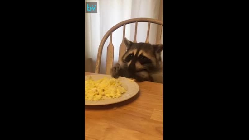 Яичницу на завтрак не только ты любишь